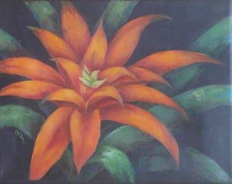 Orange Bromelaid Small II, Original Oil Painting, 8 X 10, on Black