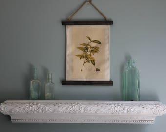 Tea decor, Kitchen decor, Tea Botanical Picture, Printed on Canvas, Naturalist Decor