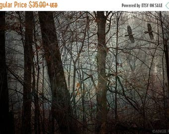 ON SALE Crow, Crow Art, Fine Art Photography, Home Decor Print, Birds in the Forest Wall Art, Unique and Mysterious Print, Dark Forest, Flyi