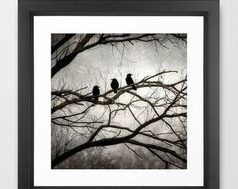 ON SALE Crow Photography, Black Crow Print, 3 Crows, Mysterious Crow Print, Crow Art, Surreal, Dark, Black, Silver, White, Moonlit