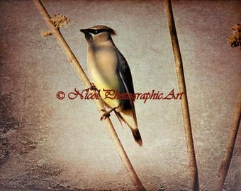 Rustic Cedar Waxwing Bird Taupe Country Decor Farmhouse Art Matted Picture A397