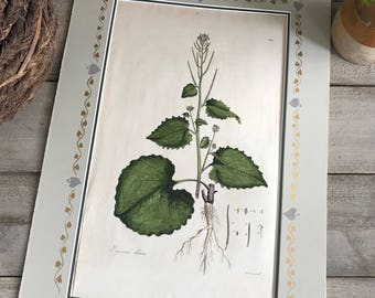 18th C Copper Engraving Botanical, Sansom Sculp, 18 x 11, Hand Colored Lithograph, Framable Artwork, Handpainted Matte