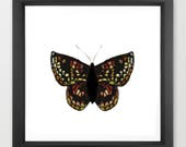 butterfly art print / nat...