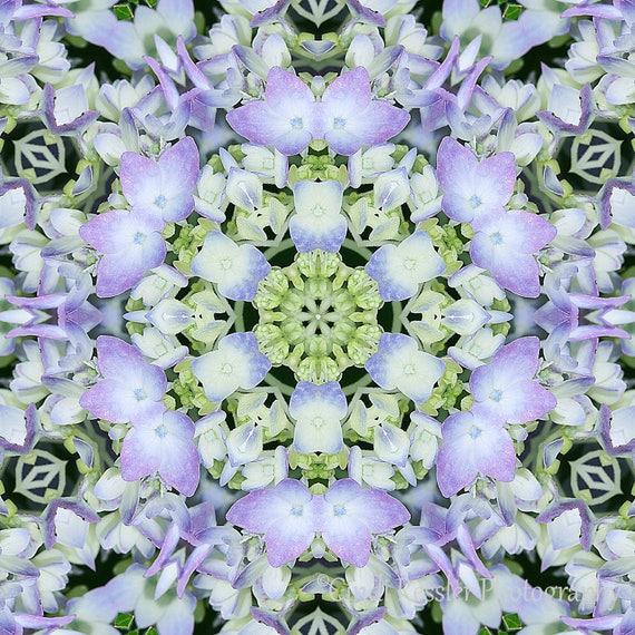 Photography, Hydrangea Kaleidoscope, Fine Art, Flower, Wall Art, Photo, Floral, Housewarming Gift, Home Decor, Garden, Living Room Decor