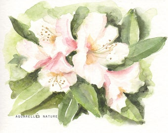 White Rhododendrons  original watercolour painting Flower art Small format