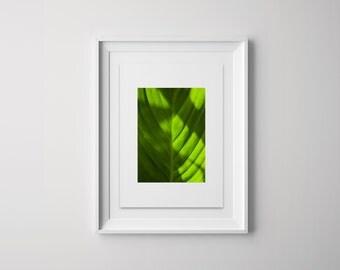 a4 Botanic Print