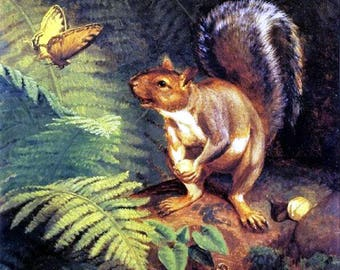 """Woodland  brown Squirrel-butterfly-how-beautiful-William Holbrook Beard  Late 1800s, antique animal art, woodland art print, 11x14""""canvas"""