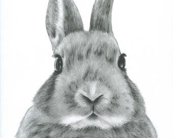 bunny rabbit portrait charcoal 8x10 print rabbit drawingbunny art