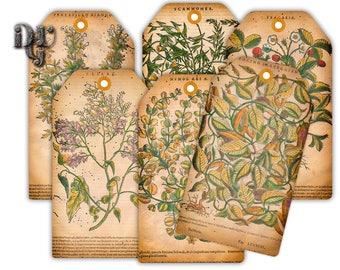 BOTANICAL Gift Tag - Printable Shabby Chic Hang Tags - Herbarium Vintage Art  - Digital Collage Sheet Instant Download printable card G004