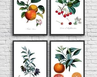 Set of 4 botanical prints, Antique illustration digital download, Botanical Vintage Art Prints, Book Plate Illustration, Vintage poster. #16
