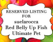 RESERVED LISTING for suelarocca Red Belly Up Fish Ultimate Pet, Fish in a bag, vegan.