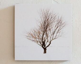 Season of Shaw Tree Winter-a Print 5x7 8x10  Standout 10x10 12x12