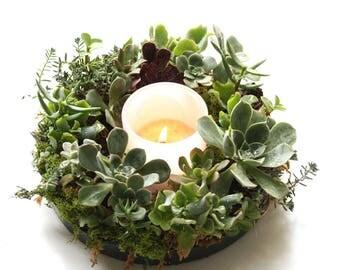 Living Succulent Centerpiece