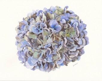 Hydrangea Bloom Watercolor Print Instant Download