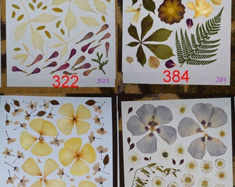 Pressed flowers, real pressed flowers, scrapbooking supplies, woodworking supplies, scrapbooking pressed flowers #322 #384 #485 #343