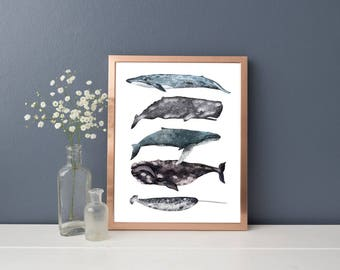Whales Illustrated Poster - Different Types of Whales - Nautical Art - Seaside Print - Illustrated Poster - Sealife Print - Whales Stacked