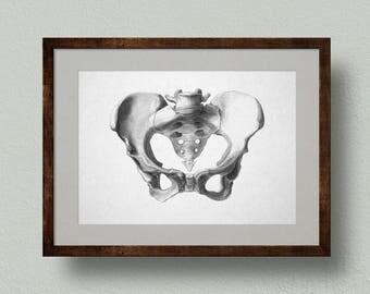 Pelvis, Bone Anatomy Print, from Original Pencil Drawing. Medical Illustration, Skeleton, Osteology Diagram, Wall Art, Decorative Gift.