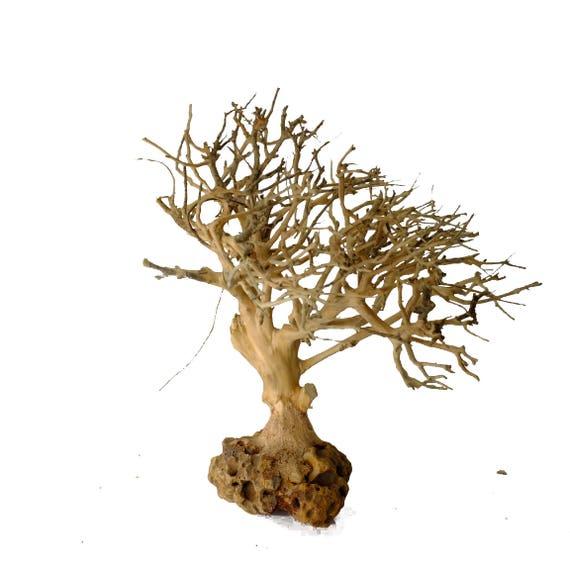 Christmas Tree Moss Aquarium: Aquarium Moss Tree Bonsai Driftwood BM 6 Inches Tall