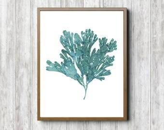 5 X 7   8 X 10   11 X 14 Watercolor Seaweed Printable   Ocean
