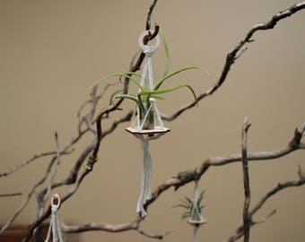 10 Air Plant Hangers with Birch Wood Base