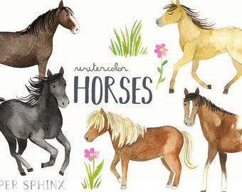 Watercolor Horses Clipart | Horse and Pony Breeds - Shetland, Clydesdale, Appaloosa, Running Horses - Instant Download Digital PNG Images