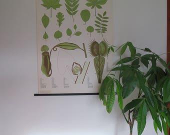 Vintage German school chart of THE LEAF botanical school wall chart