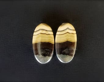 RARE Schalenblende & Galena Cabochon Pair for earrings.