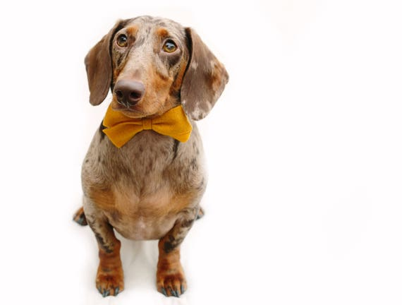 Felt Bow    Dog Bow Tie    Dog Headband    Felt Bow    Doggie Dress Up