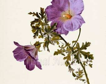 Lilac Hibiscus Flower Art Print, Botanical Art Print, Flower Wall Art, Lilac Flower Print, Lilac Art Print, Floral Print,Home Decor,purple