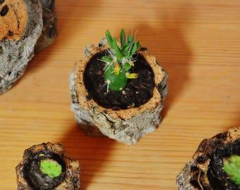 Natural Cork Planter, Handmade Organic and Eco-friendly Cactus and Succulent Planter. Medium High Pot.