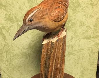 Carolina Wren,bird,carving,paint,