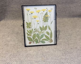 Genuine vintage framed botanical drawing, flower illustrations, botanical print, floral, in glass frame, butterfly yellow
