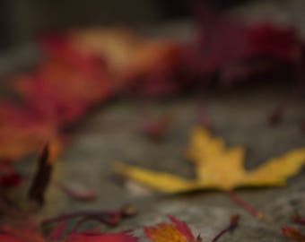 Greeting Card | Fall Leaves | Falling in love | Autumn | Note card