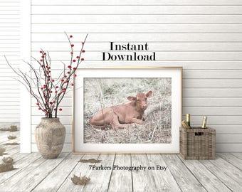 Rustic Wall Decor; Calf Print; Farm Animal Download; Printable Wall Art; Country Wall Art; Instant Downloads; Farm Animal Prints; Farmhouse.