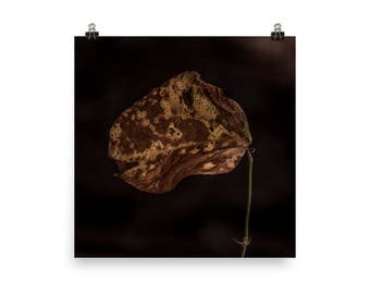 autumn leaf print | nature photography