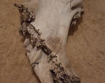 Driftwood decor piece