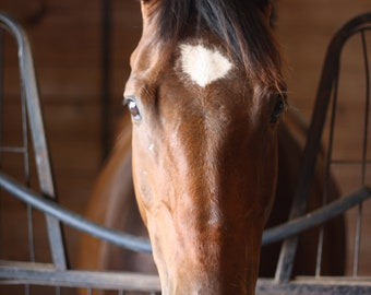 A Stallion's Portrait