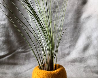 Felted wool bowl with air plant