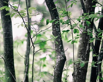 landscape photography trees woods Spring nature photography wall decor