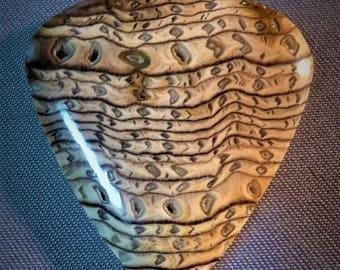 Hells Canyon Petrified Wood Cabochons