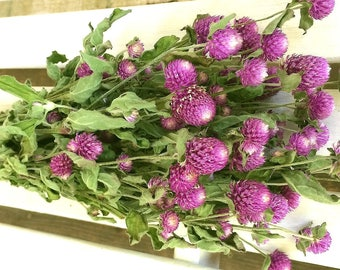 DRIED FLOWERS Wedding Flowers bi-colored Lovely ROSE Pink color Globe Amaranth Flowers gomphrena flower bunch, Prim, Shabby cottage Country