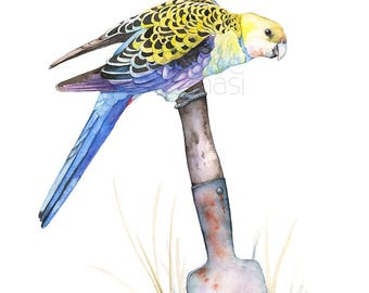 Pale Headed Rosella print, 5 by 7 size PHR21917, Australian bird art, Rosella watercolor painting print, Australian bird print