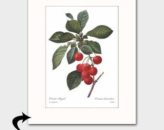 Cherry Art w/Mat (Red Kitchen Decor, Vintage Fruit Wall Artwork) Matted Redoute Botanical Print