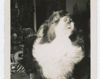 Vintage Snapshot Photo: Dog & Xmas Tree, c1950s (75582)