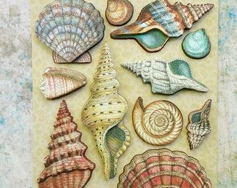 SEASHELL STICKERS, 3D Shell Stickers, Shell Stickers, Tim Coffey Travel Stickers, Glittered Shell Stickers, Seashells, Tim Coffey Travel