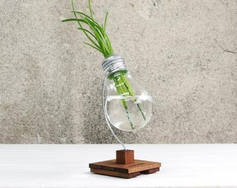 Terrarium Vase, Desk Decor, Plant Vase, Lightbulb Vase - BETA - Reed Diffuser, Flower Holder, Lightbulb Terrarium, Wooden Gift, Small Decor
