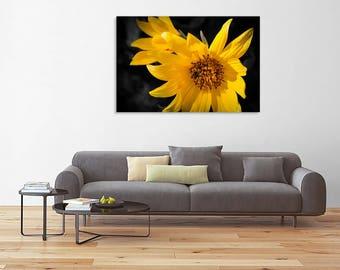 Fine art flower photography - Sunflowers on Black - original home decor black yellow wall art print