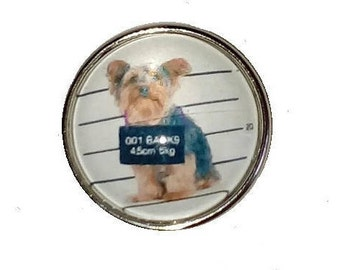 Snap guilty dog glass