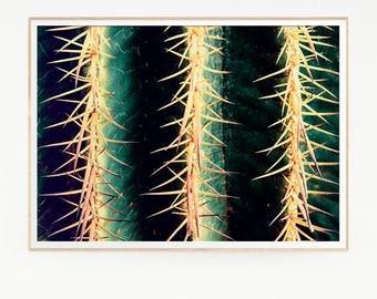 Cactus Print Poster Wall Decor Tropical Retro Vintage Colour Photo Nature Minimalist Blue Sky Leaf Succulents Green Desert West Photo 1035