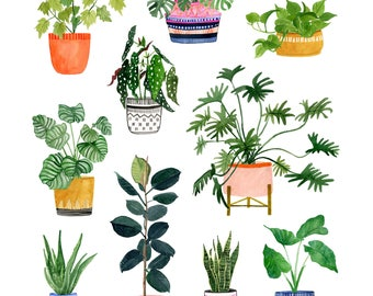Plant Wall - Archival Print by Lindsay Gardner